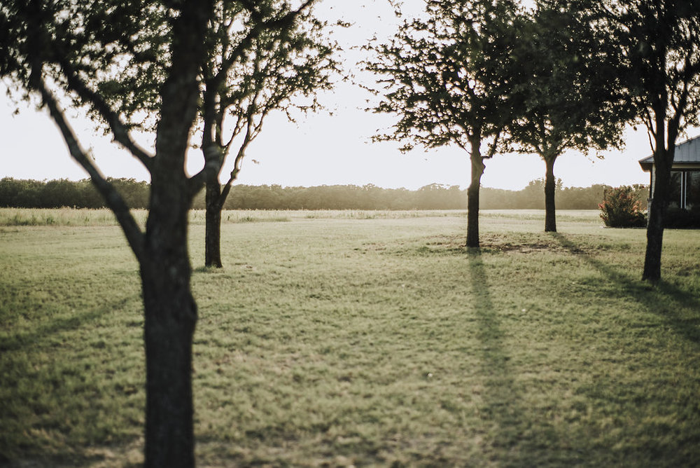 ranch_trees_sun.jpg