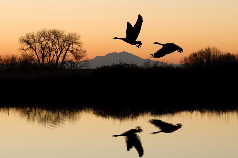 geese-over-lake-960x640.jpg