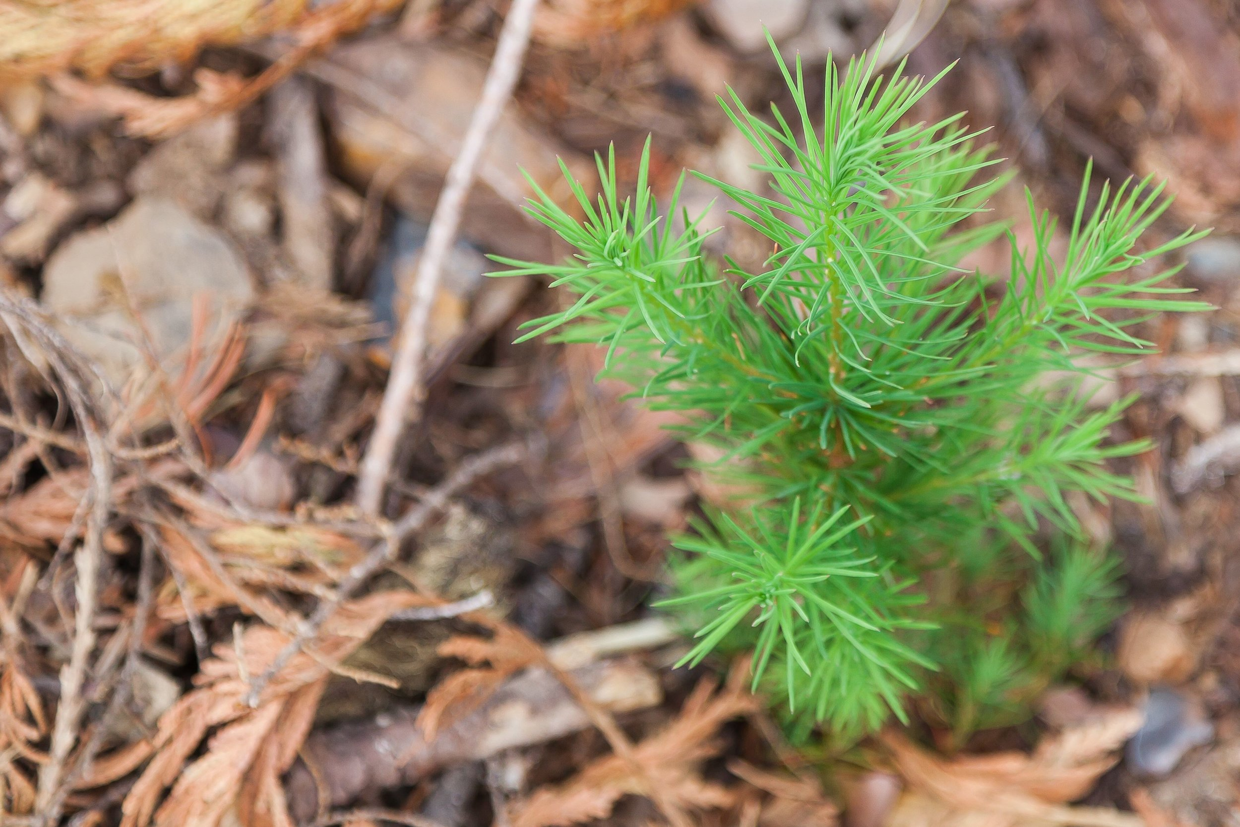 ForestManagement_Planting_Gallery_1.jpg