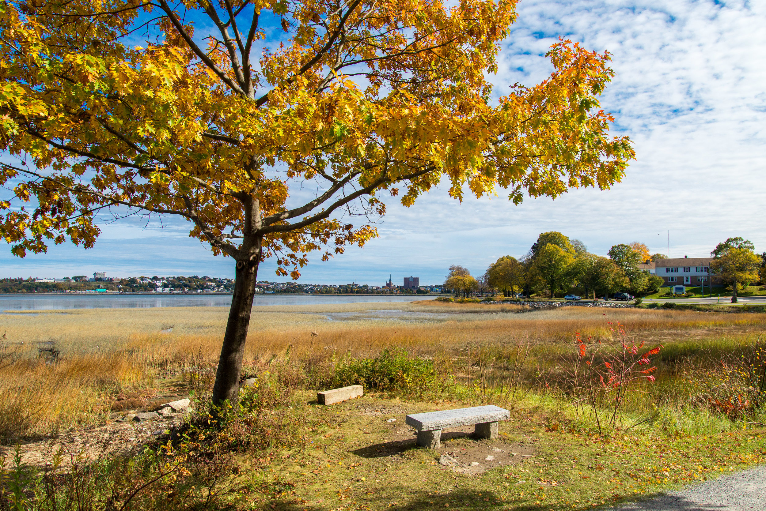 October_2014_Portland_Maine_20141019-DSC_5035 By Corey Templeton Back Cove Foliage and Bench large.jpg