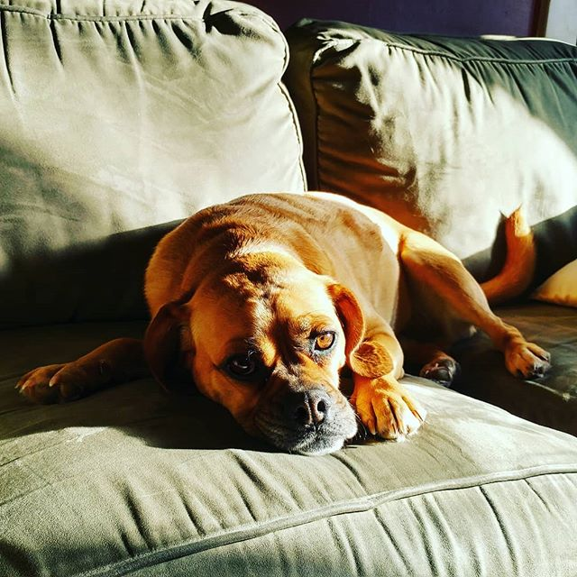 The excitement of the holidays is over! Are you feeling wiped out like our buddy, Finnley? Now is the time to recharge. Use the gift certificate you got for Christmas. You might even get to chill with Finn before your treatment. 🐕 We have openings tomorrow and next week! #wellnessmassagecenter #wellnessmassagevt #massageisthebest #postholidaycrash #finnleythepuggle #therapydog #thatfacetho #cashinyourgifts #treatyoself