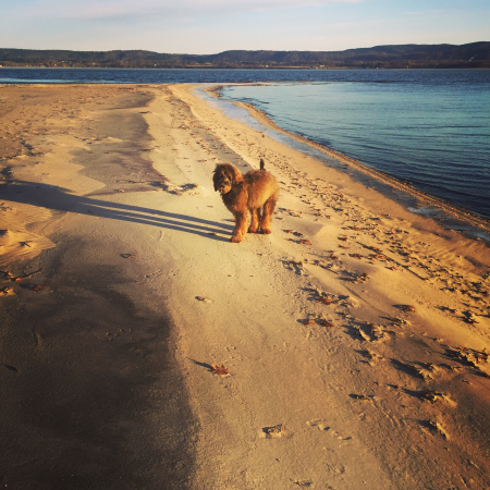 Bailey on the Ottawa River beach overlooking the Gatineau Hills