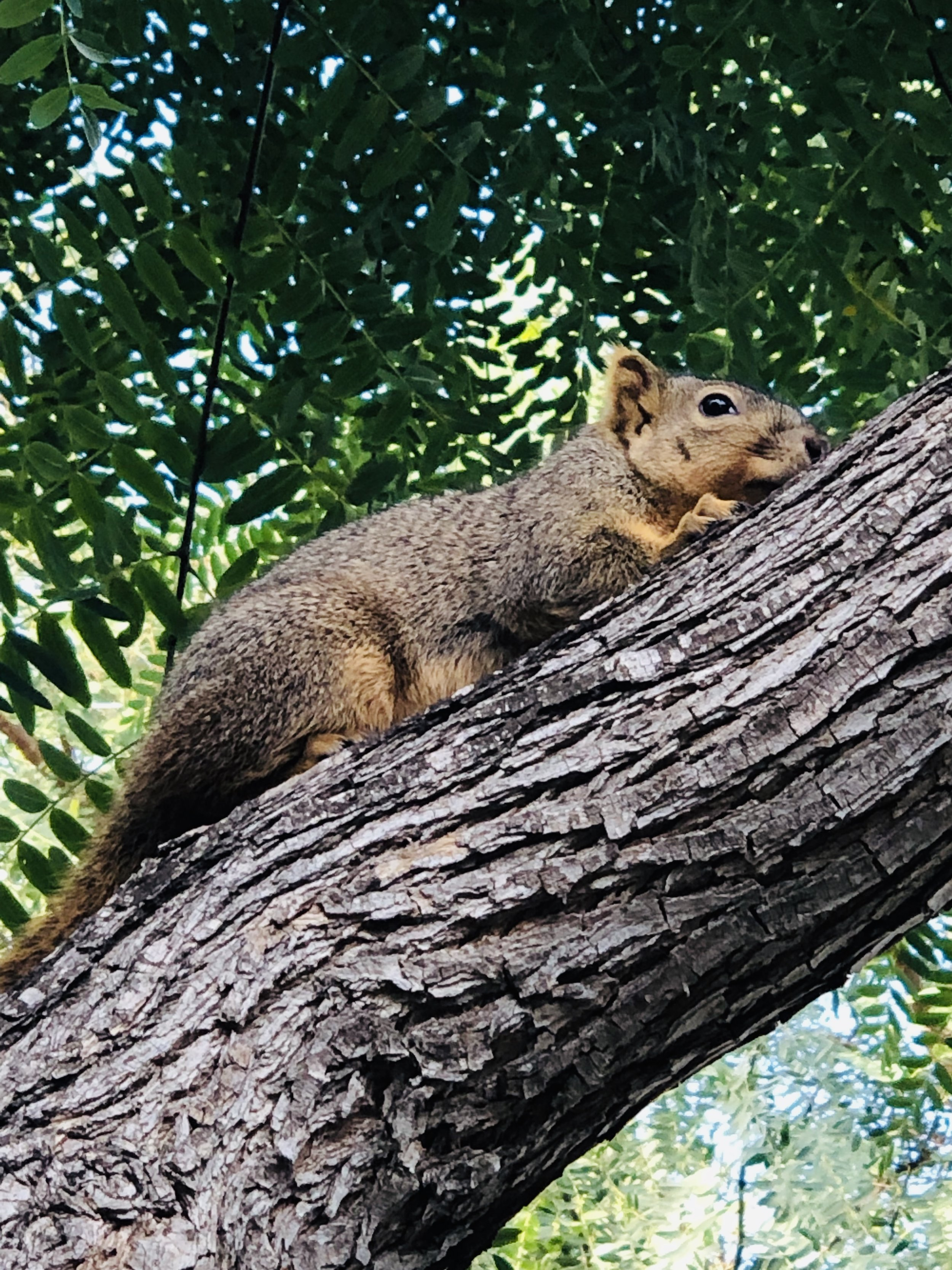 Tree Lounging - I love the casual curiosity in this adorable squirrel's eyes! He is perfectly safe, resting comfortably and peering nonchalantly at me. I so need to remember that this is how I too was created to live - perfectly safe in the Lord, resting in the shelter of His wings and unintimidated by anyone or anything around me, knowing full well that the Lord is my Protector, Provider, Comforter and so much more.