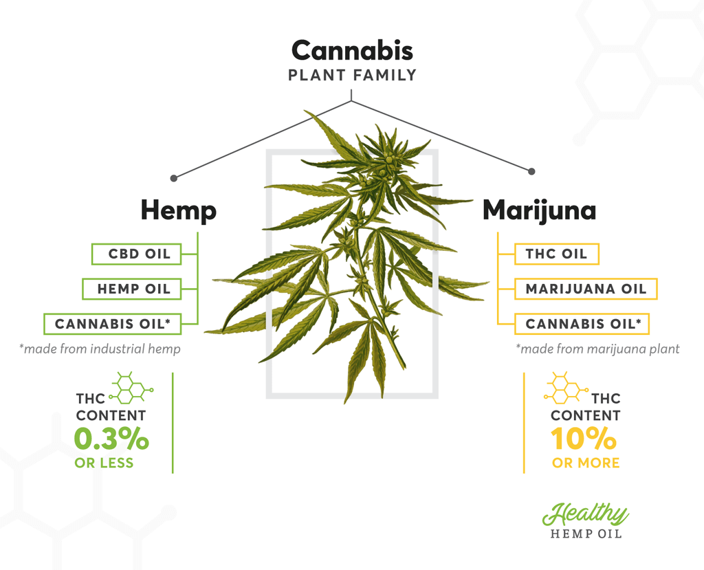 hemp-marijuana-difference.png