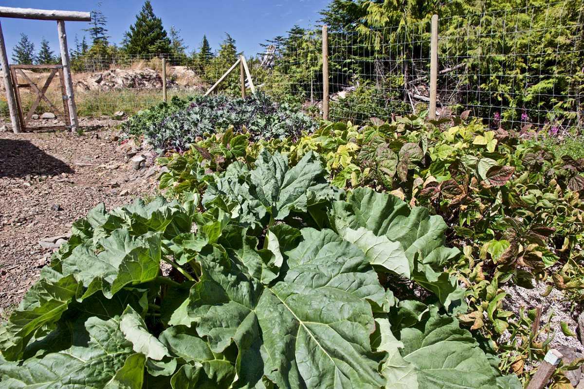 kapoose-creek-retreat-vegetables.1400x0.jpg