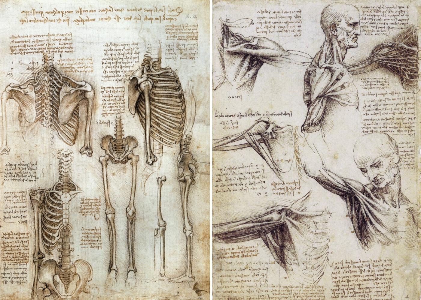Leonardo-da-Vinci-the-Anatomical-Artist2.jpg