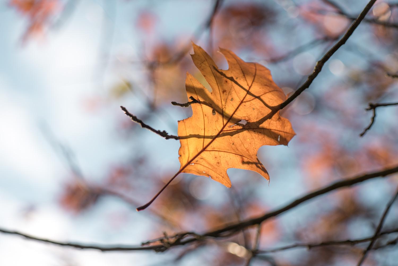AutumnLeaves-1.jpg