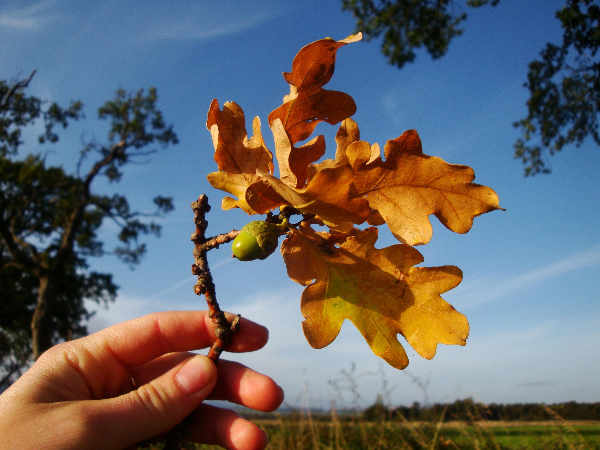 harvest 128.jpg