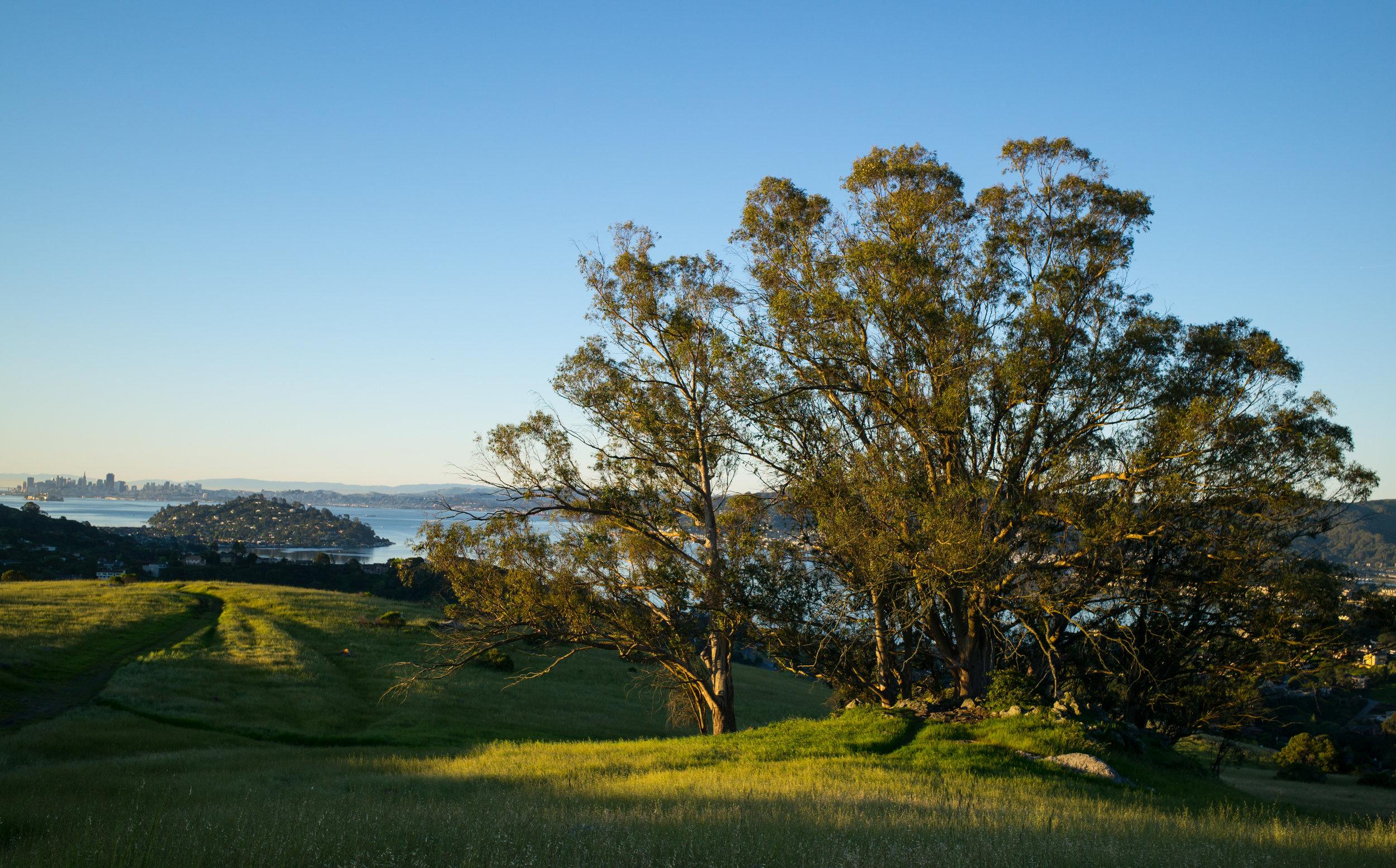SunriseRingMountain-Tree.jpeg