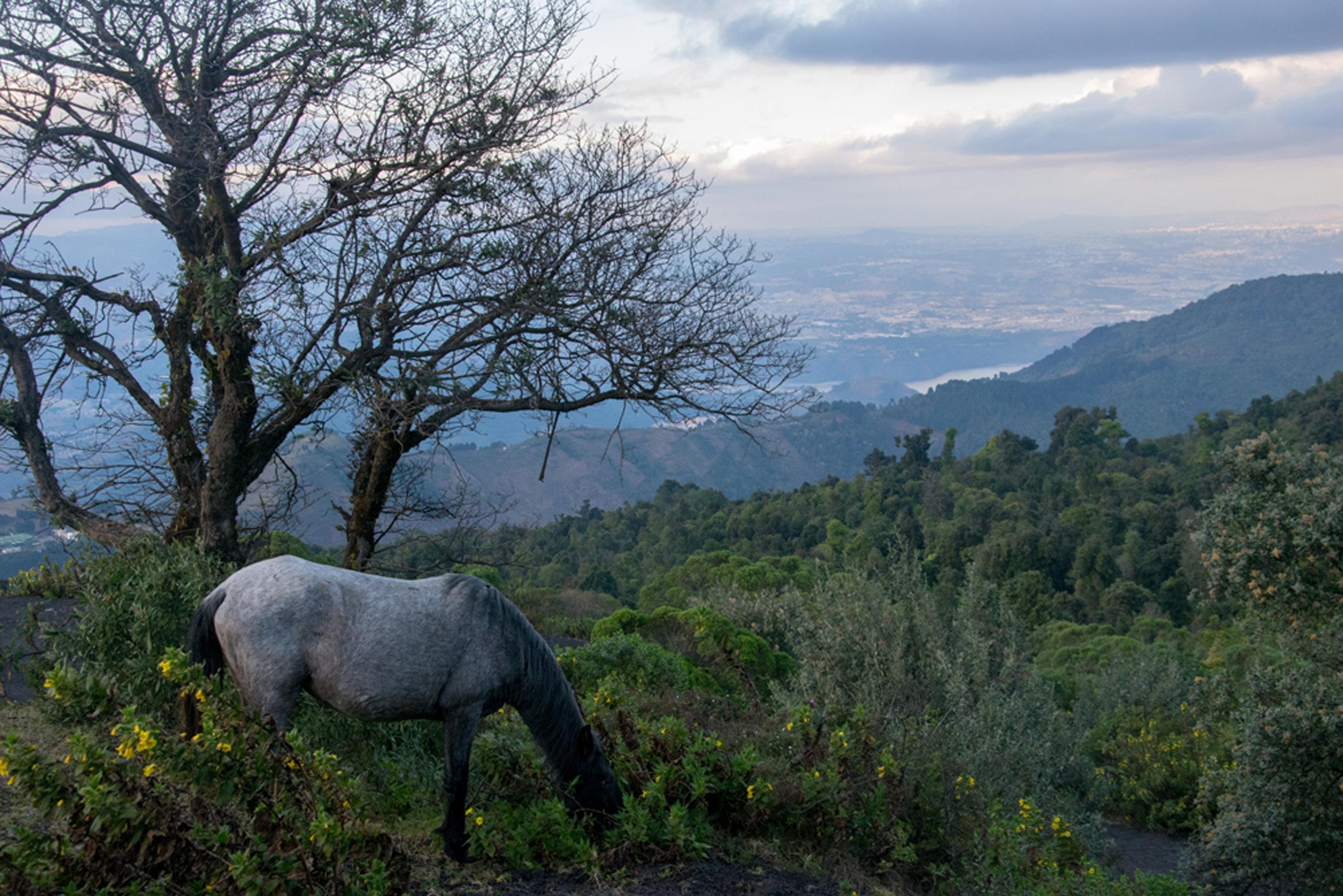 horse_pacaya_volcanojpg