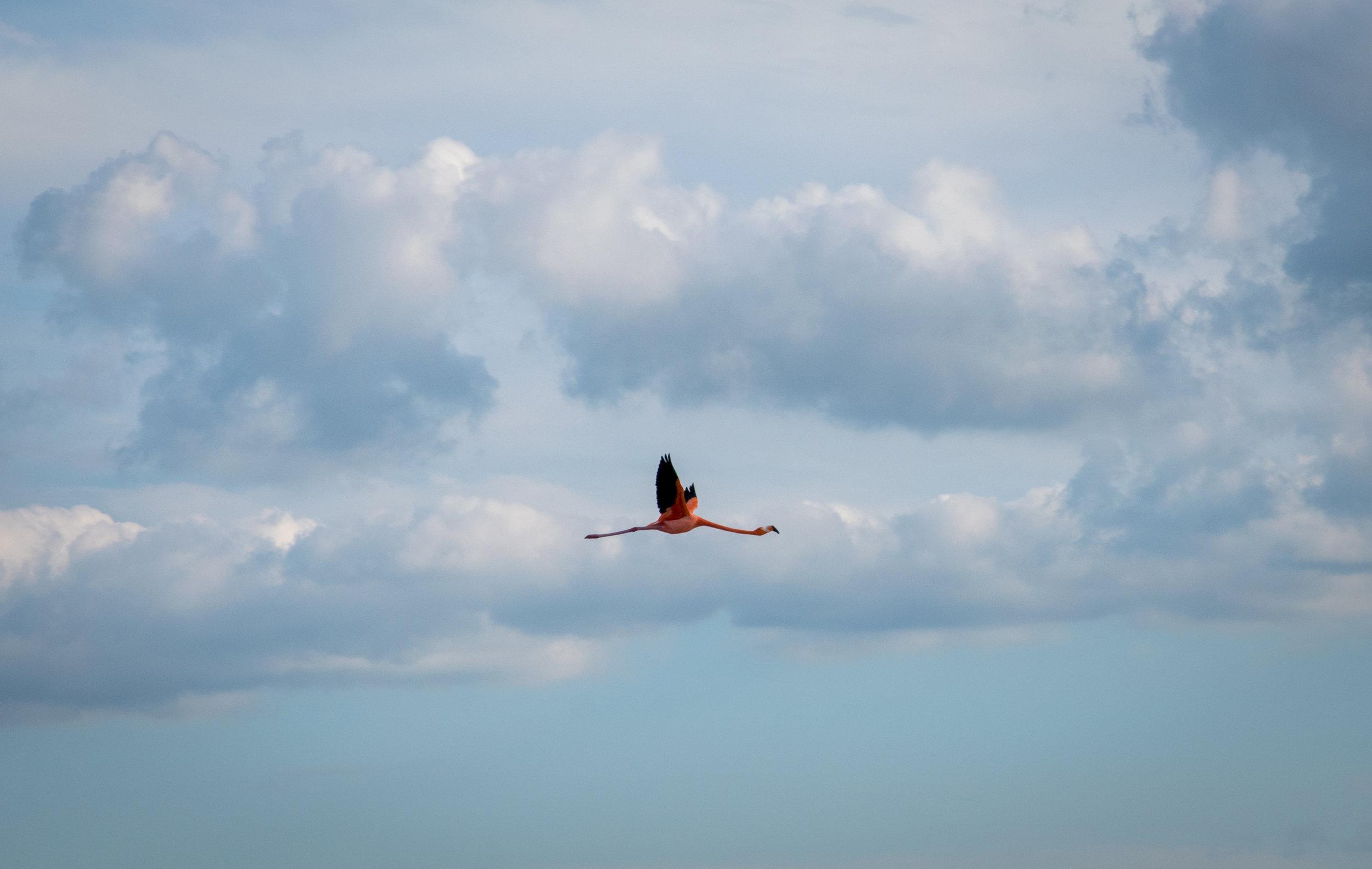 flamingo_celestun.jpg