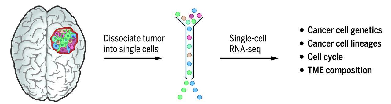 Neuro_Single_Cell_Sequencing