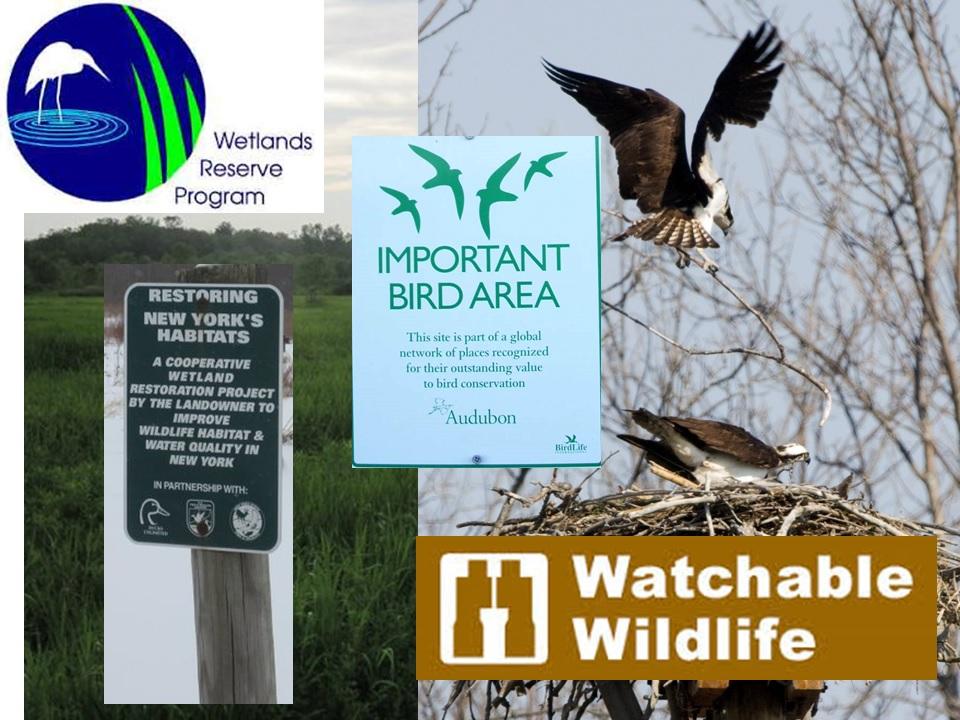 watchable-wildlife-1.jpg