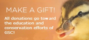 Donate-button-Make-Gift-300x167.jpg