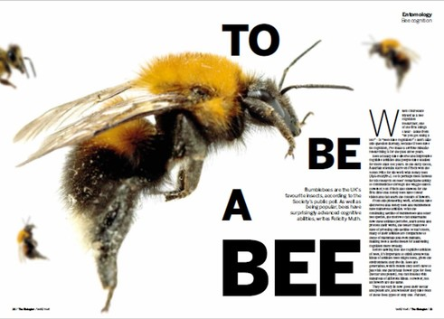 """article in the biologist - """"To be a Bee"""", The Biologist."""