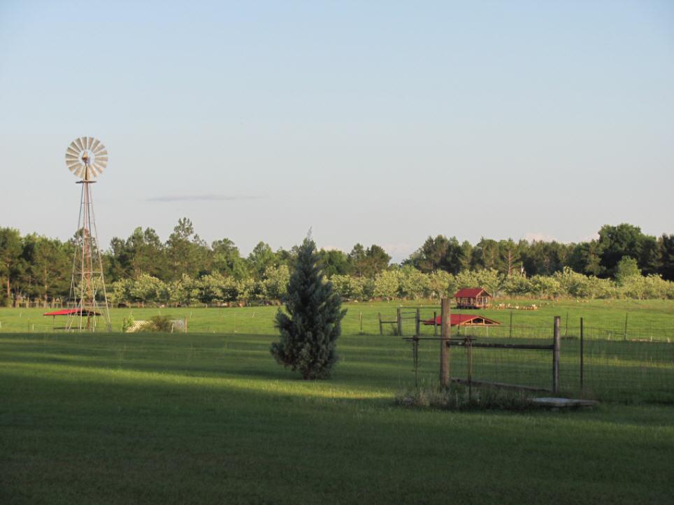 farm view from yard.jpg