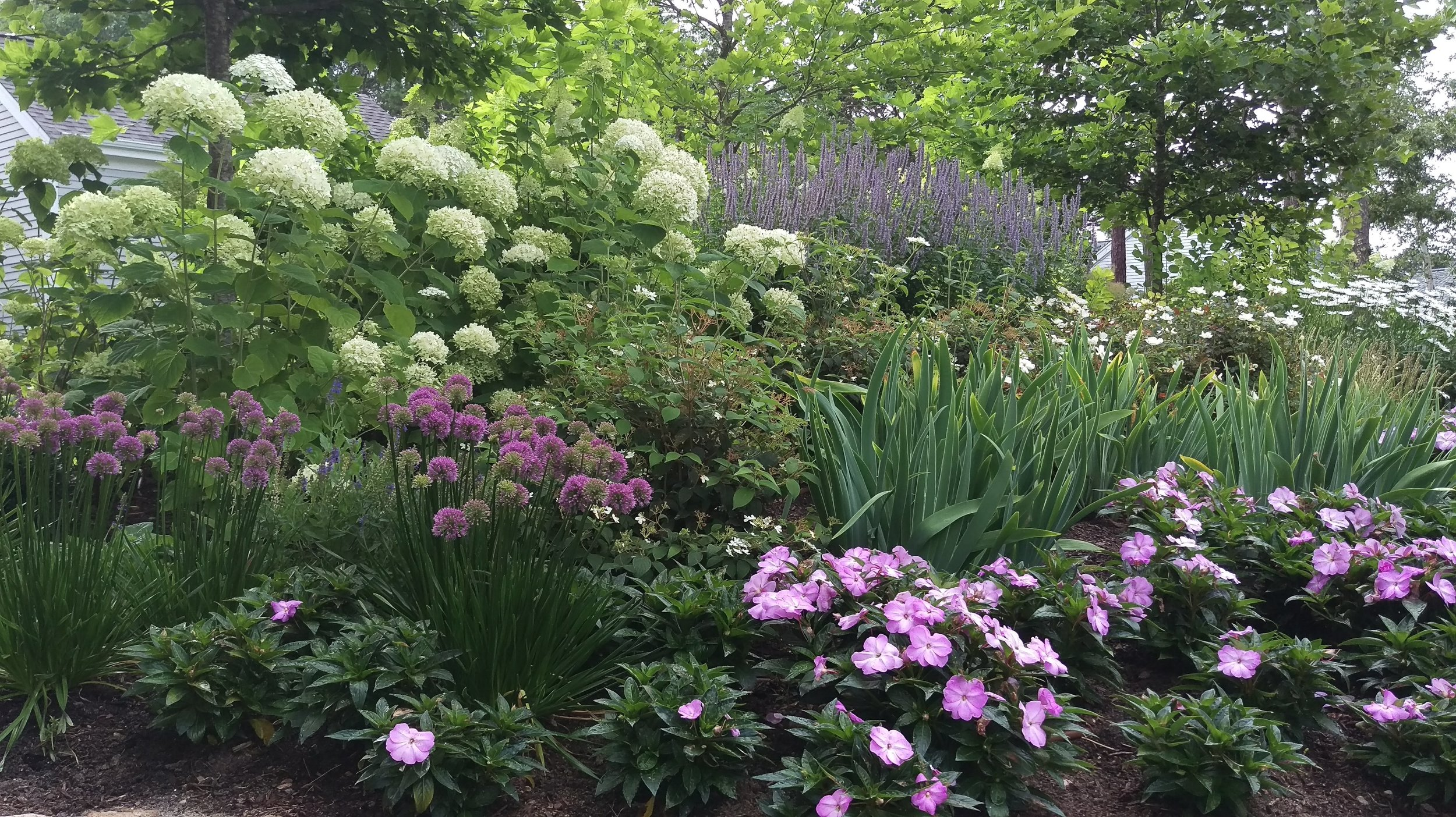 Willowbend Driveway Garden (After)