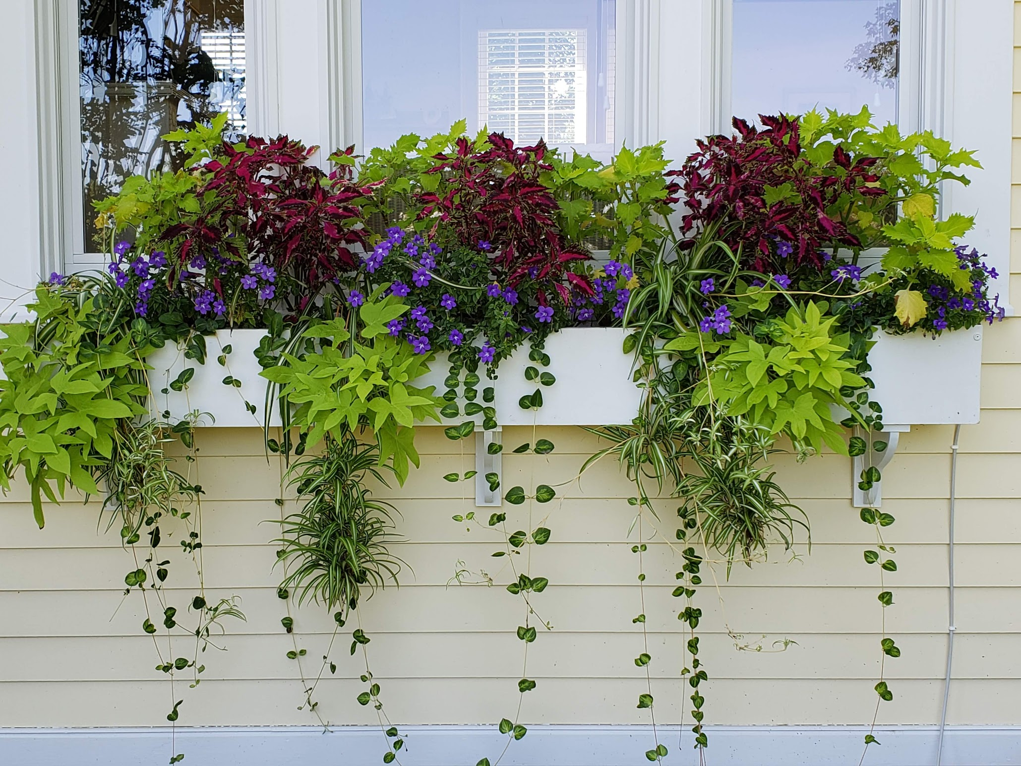 Windowbox Designs