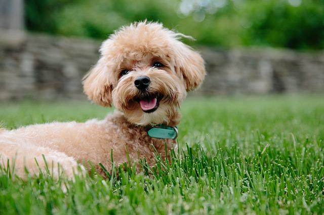 puppy-3979350_640.jpg