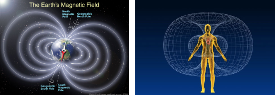 These pics will give you a visual on these fields – the Earth's and the human heart field as an example.