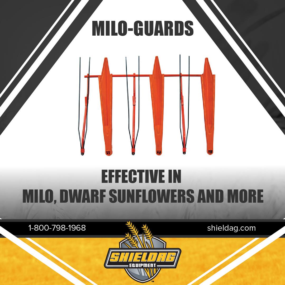 SHD_Milo_Guards-01.jpg