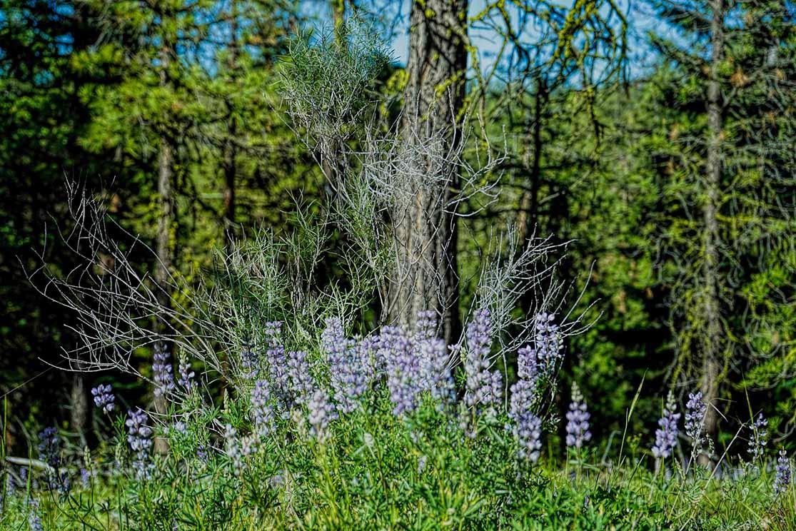 Malheur-Forest-Galery-08.jpg