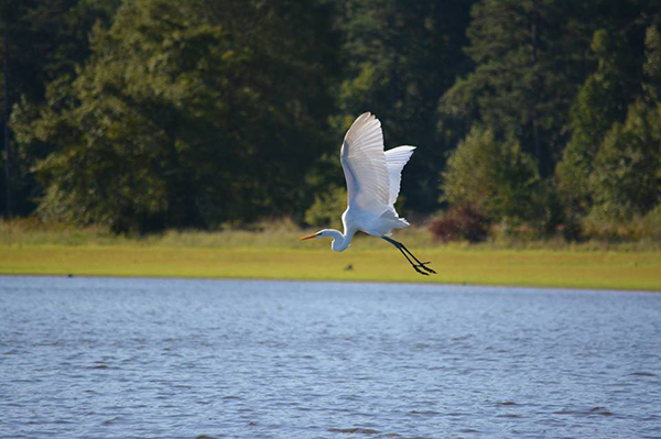Birdwatching on Clarks Hill Lake
