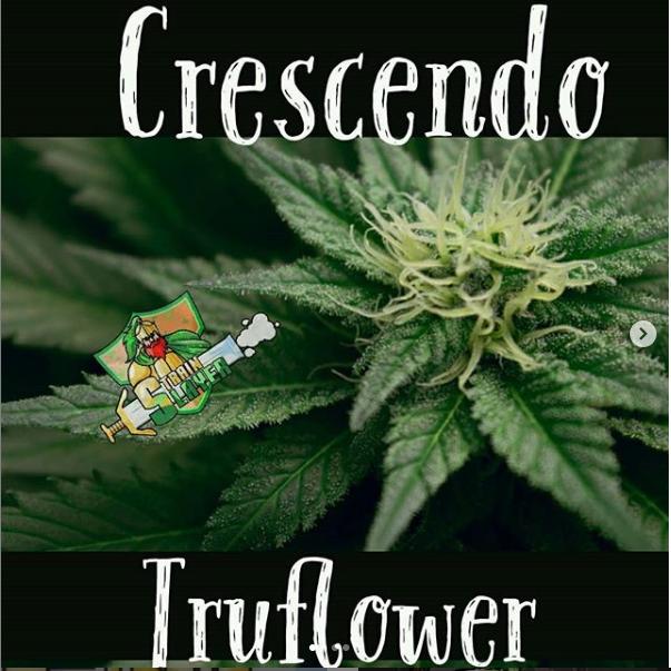 crescendoflower.PNG