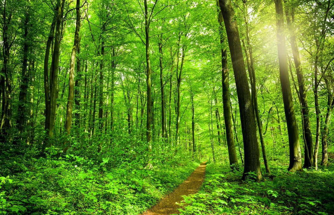 sunny-forest-path.jpg