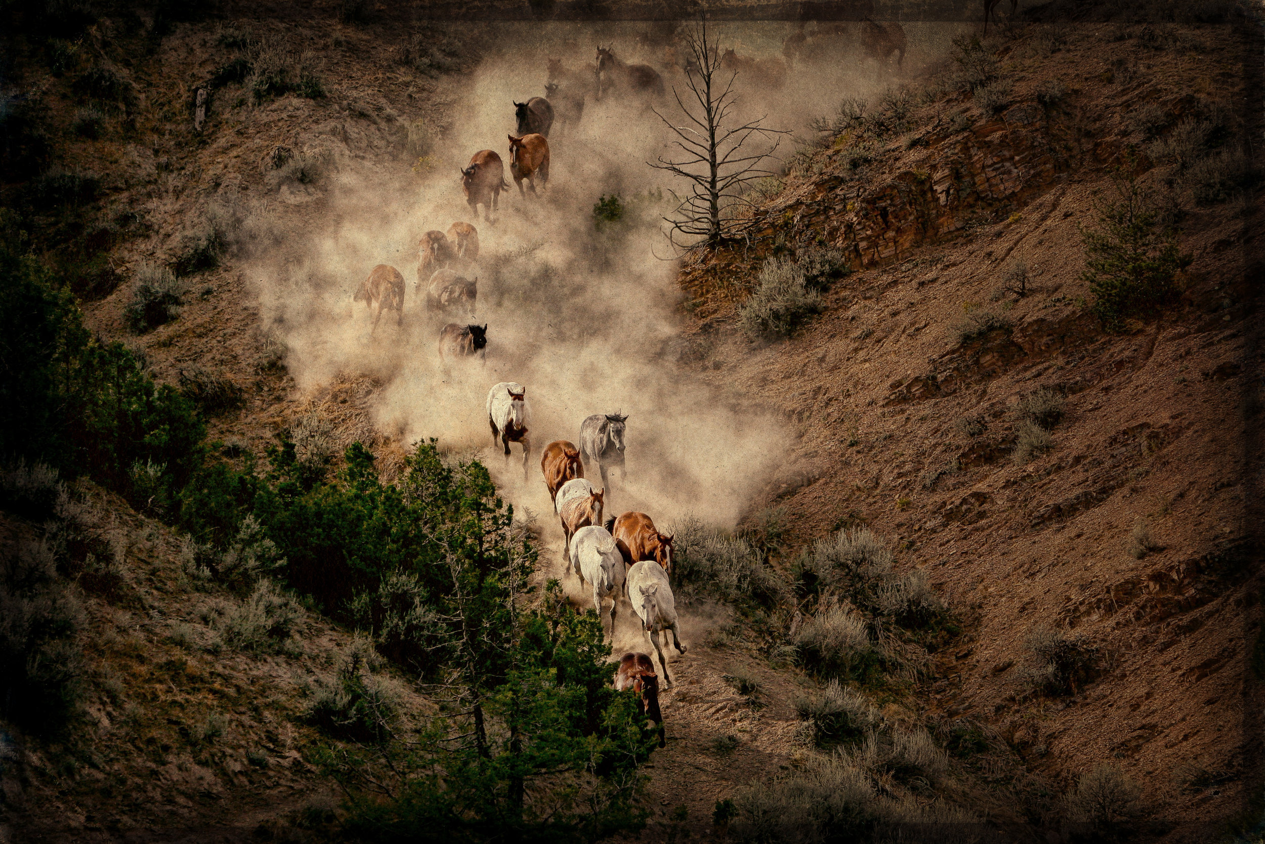 Horses for Lease -
