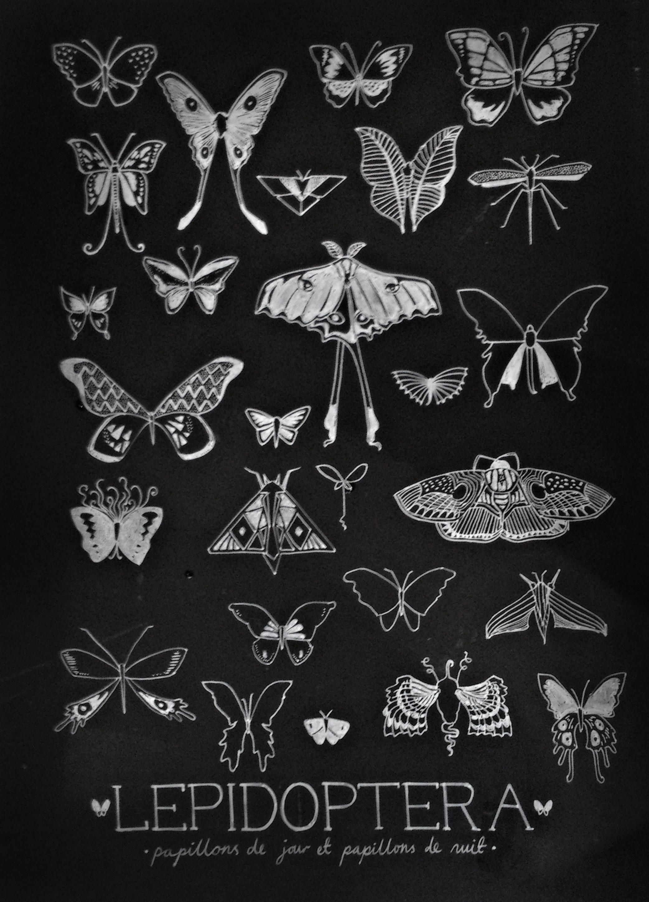 lepidoptera_black.jpg