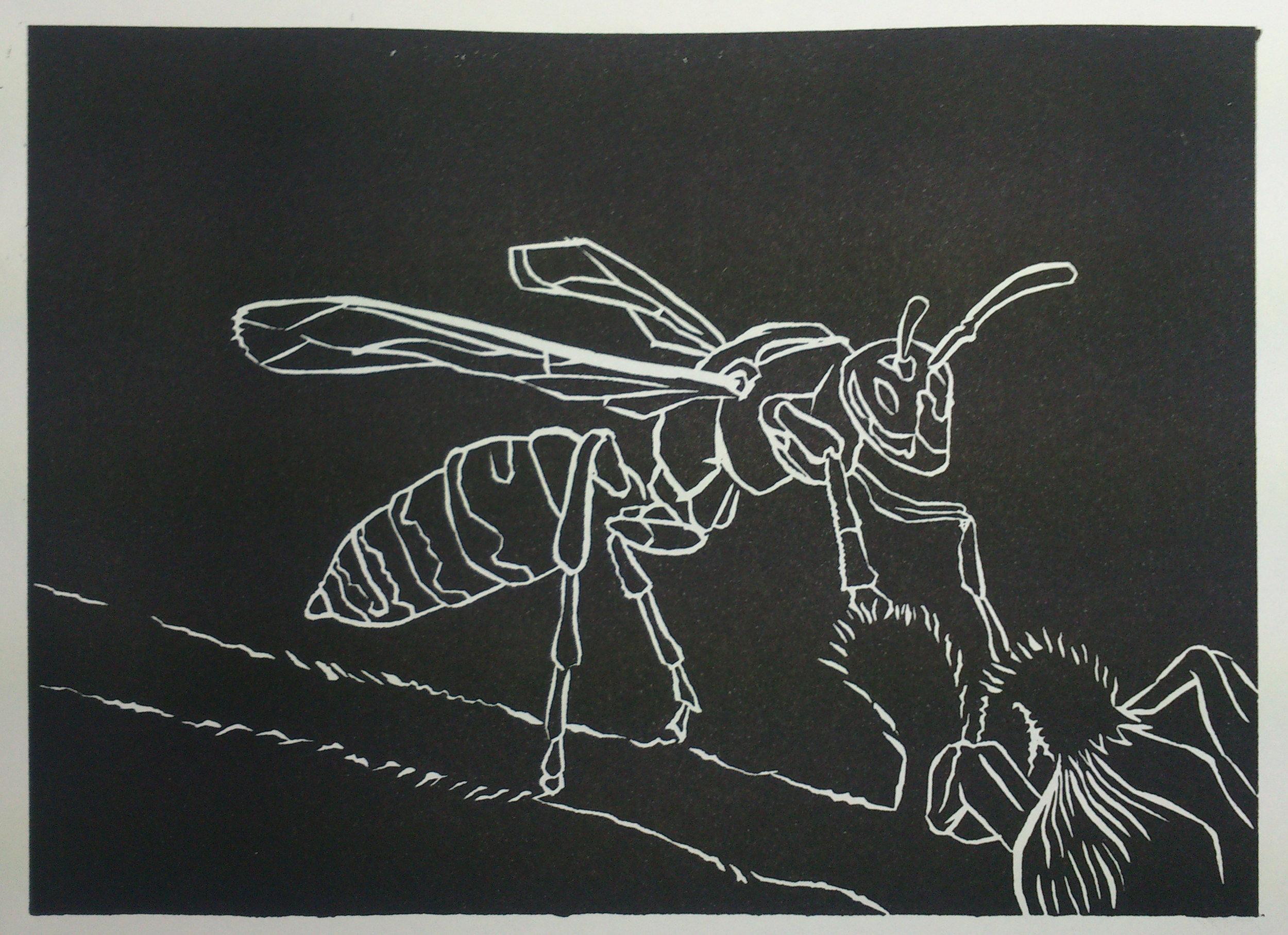 wasp 02.jpg