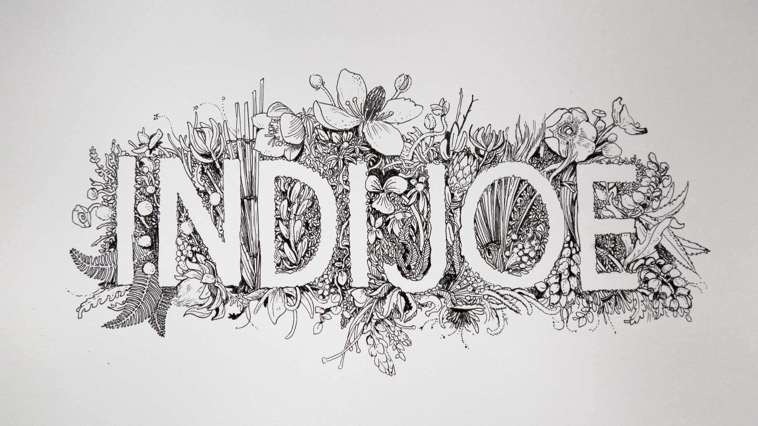 Indijoe Illustration.jpg