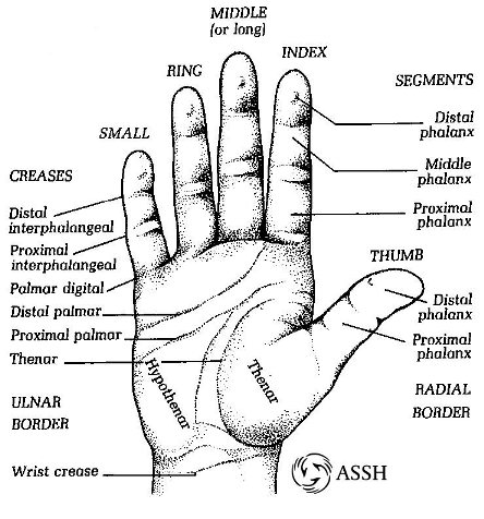 handanatomy_surface.jpg