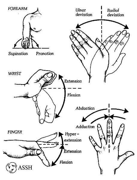 hand_Movement1.jpg