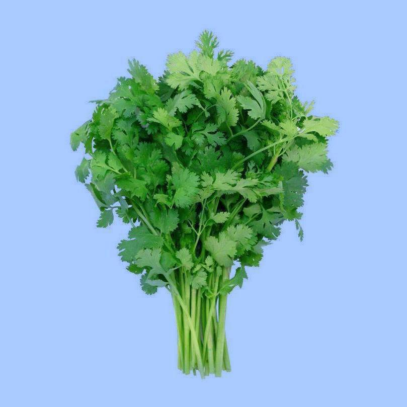 cilantro-coriander.jpg