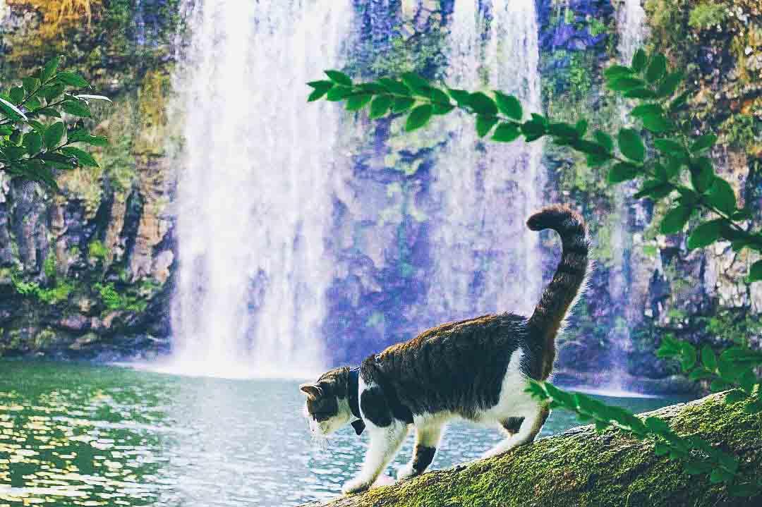 @hellopistachio at Dangar Falls