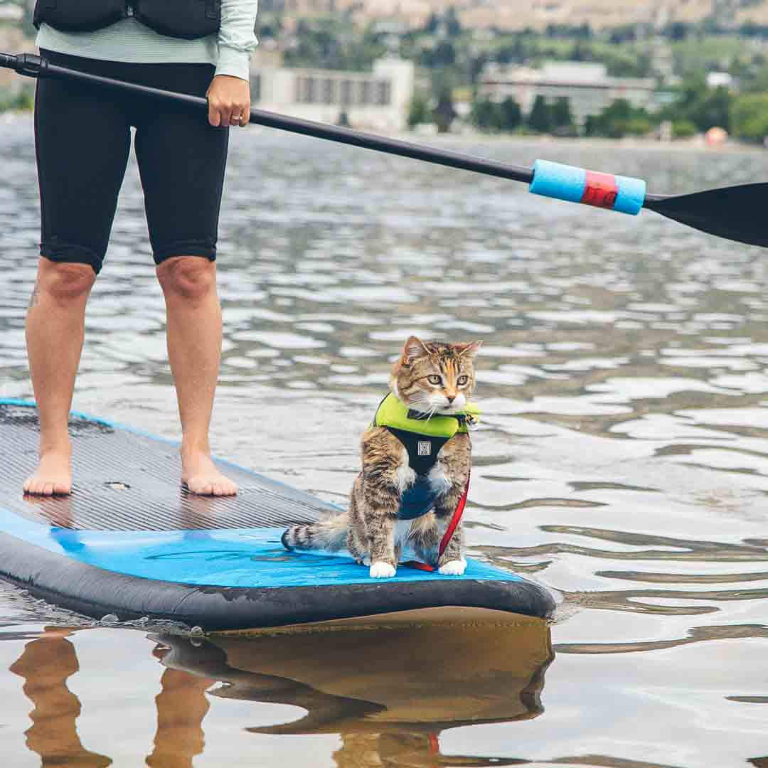 @adventuresofmikeandlily wearing a life jacket while on a stand up paddleboard