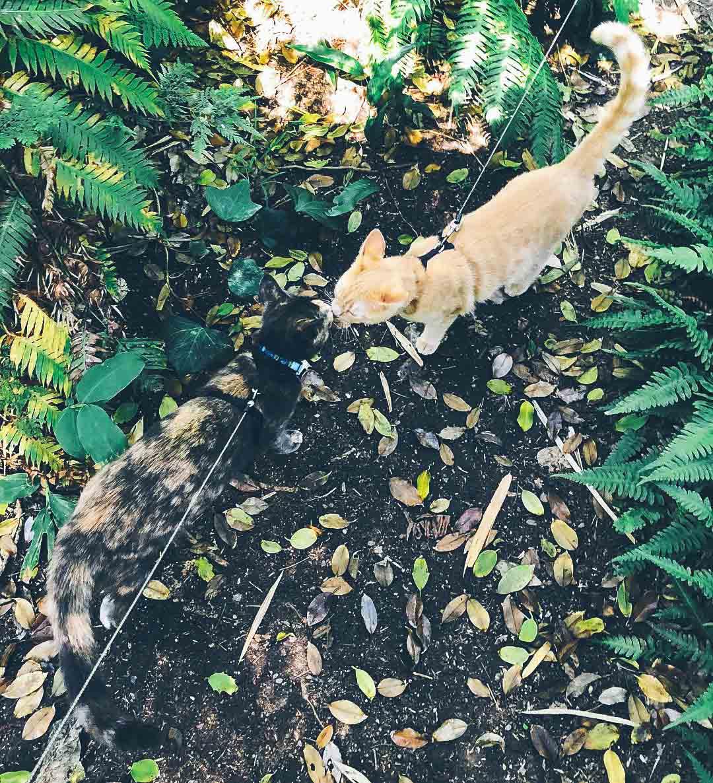 @waffles_cocoa are wild cats?