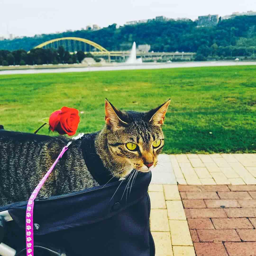 @zinnia_thetravellingcat in a Vivo Four Pet Stroller