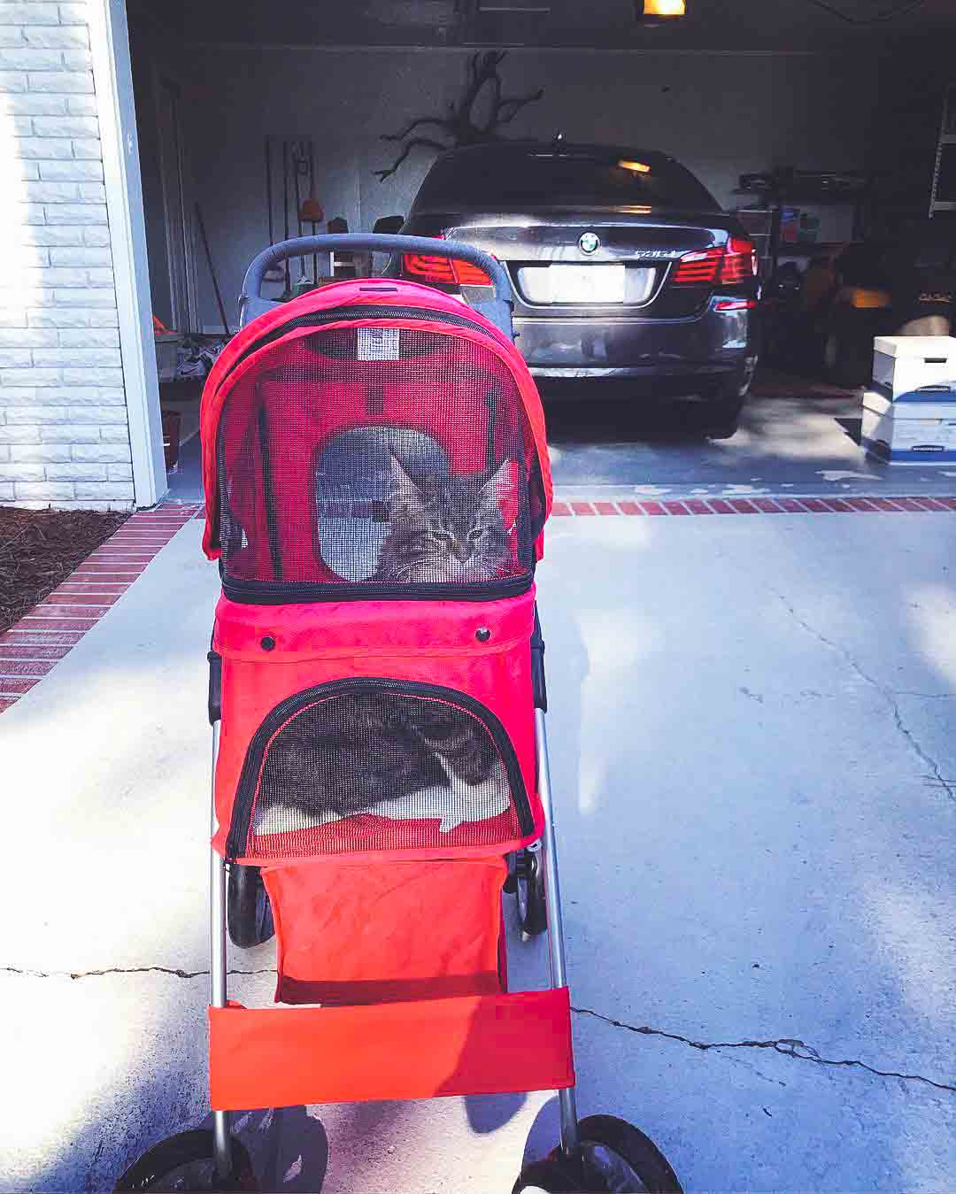 @bellaelain.mainecoon in an Oxford Double pet stroller