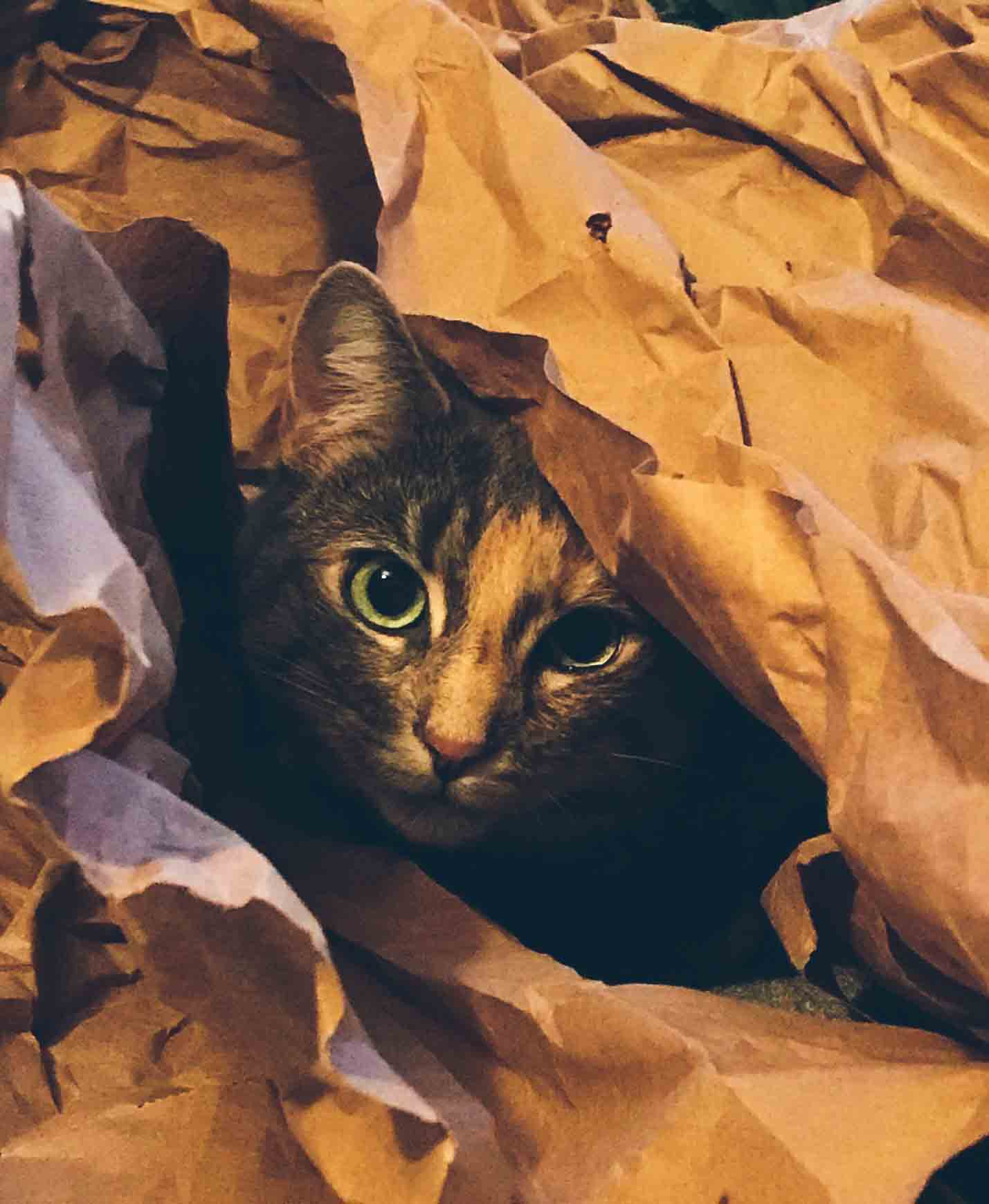 Cat in Favourite Toy of Crinkle Paper.jpg