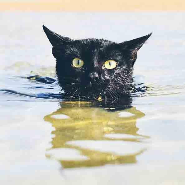 @nathan_thebeachcat enjoying a swim