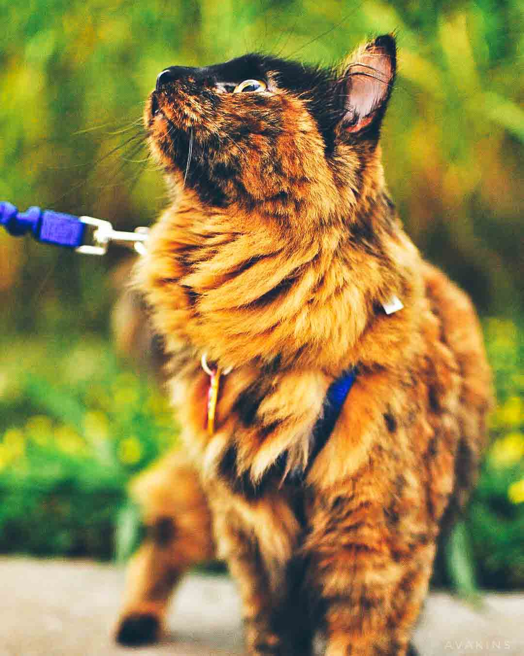 cat in grass.jpg