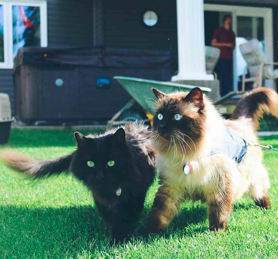 @nikki_forest_cat