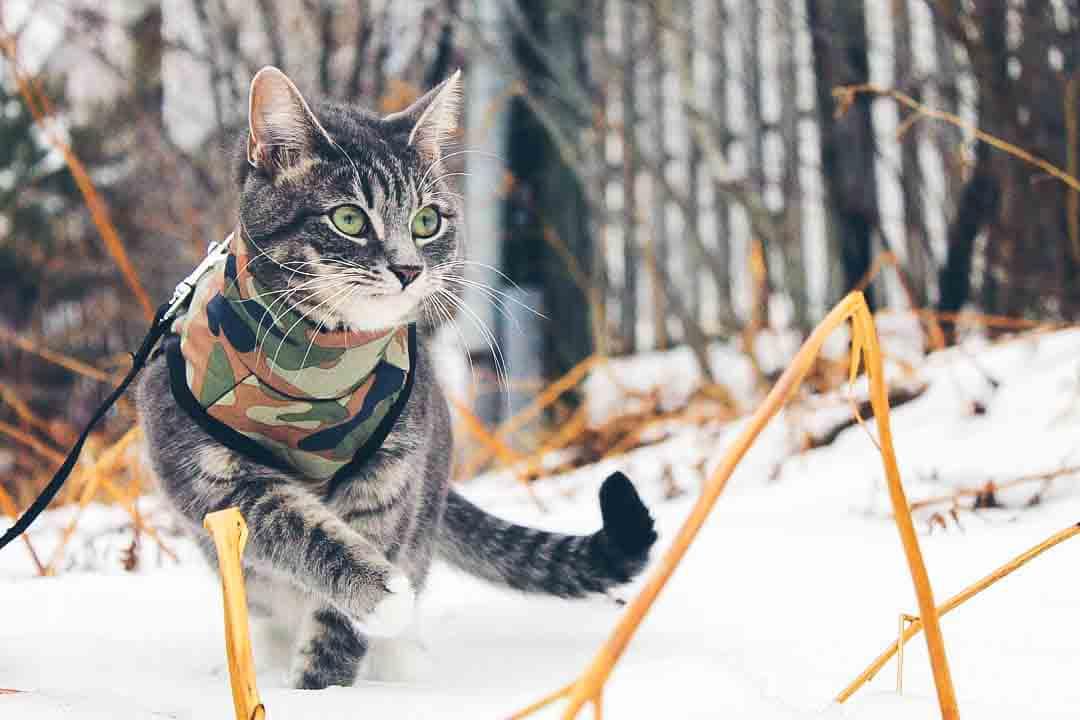 cat in snow pebbles.jpg
