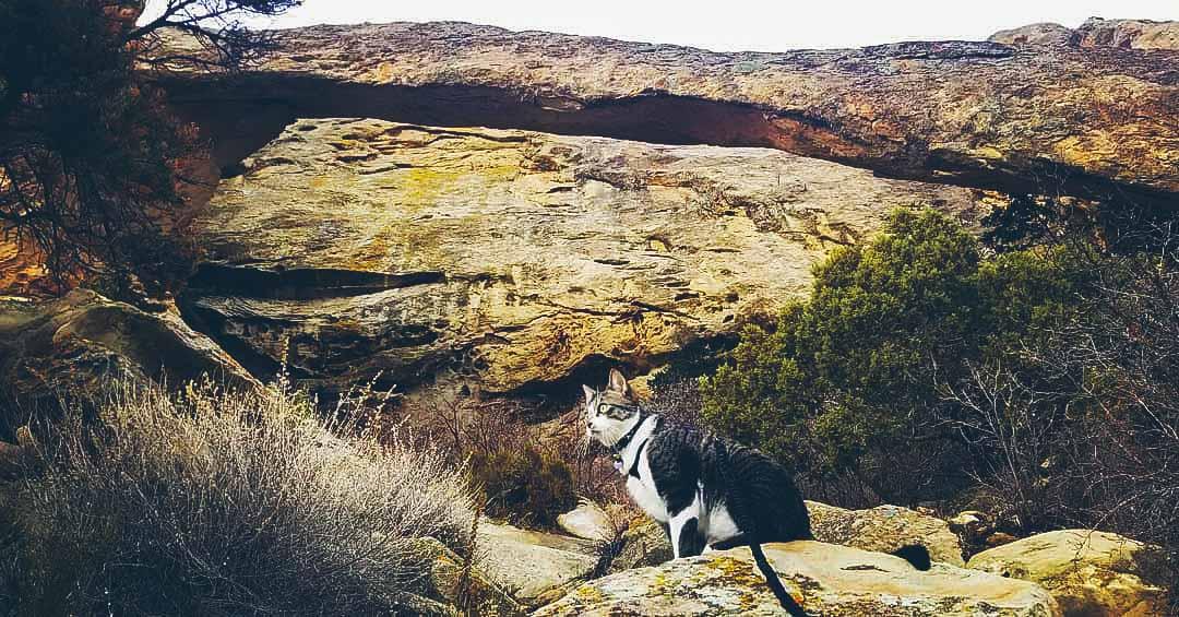 Instagram: astrocat_adventures