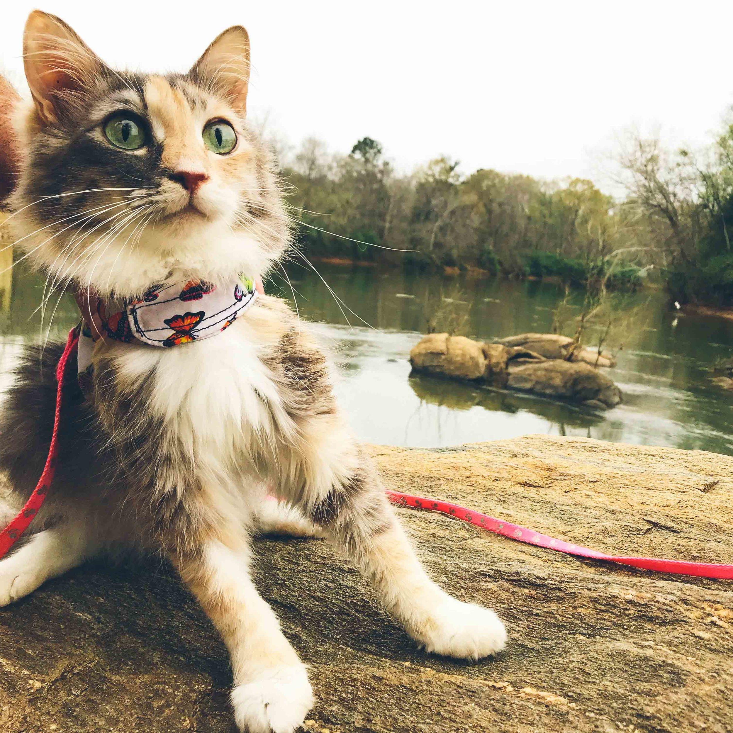 Kitty Cat Chronicles - Georgia