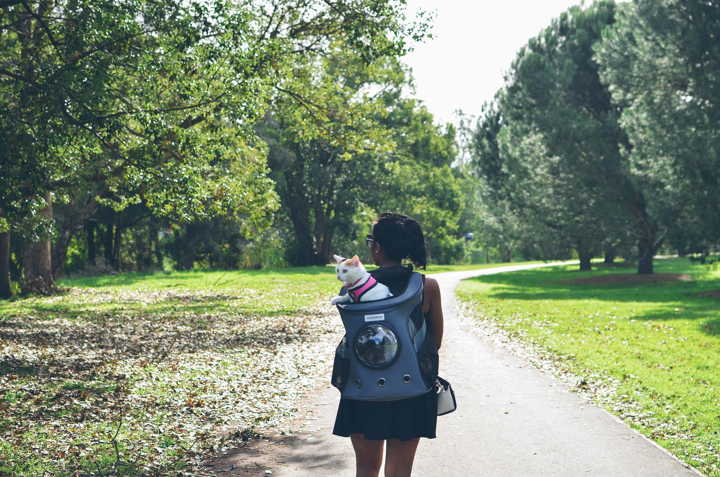 cat-backpack-catexplorer