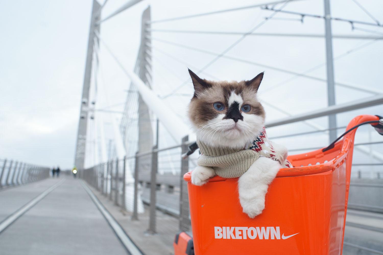 cat-on-a-bike